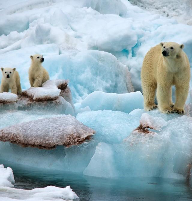 en Svalbard