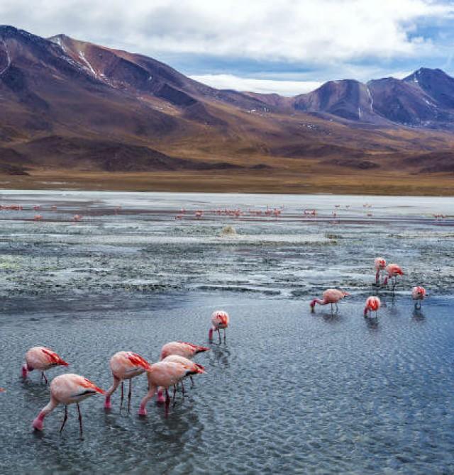 Lagos de Eduardo Avaroa en Bolivia