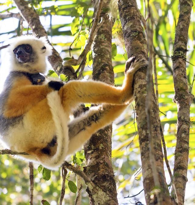 Parque Nacional de Ranomafana en Madagascar