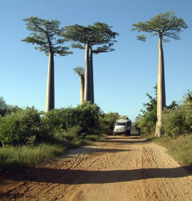 Berenty en Madagascar