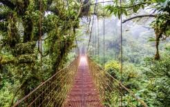 La selva de Monteverde en Costa Rica