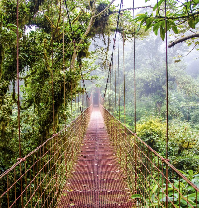 La selva de Monteverde