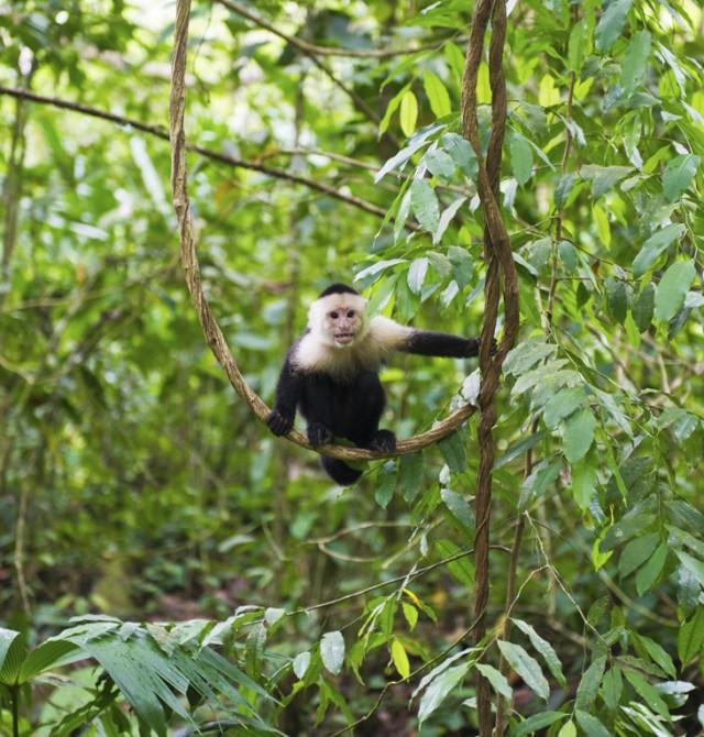 Arenal - Monteverde en Costa Rica y Panamá