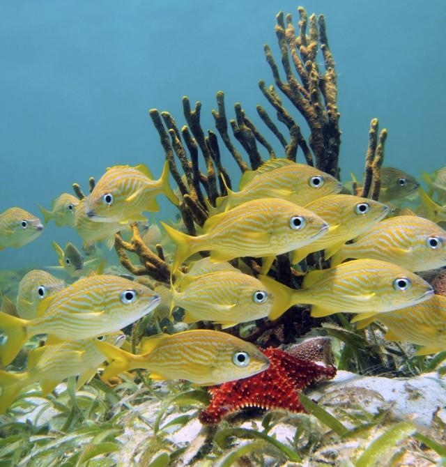 Snorkel en aguas cristalinas en Costa Rica y Panamá