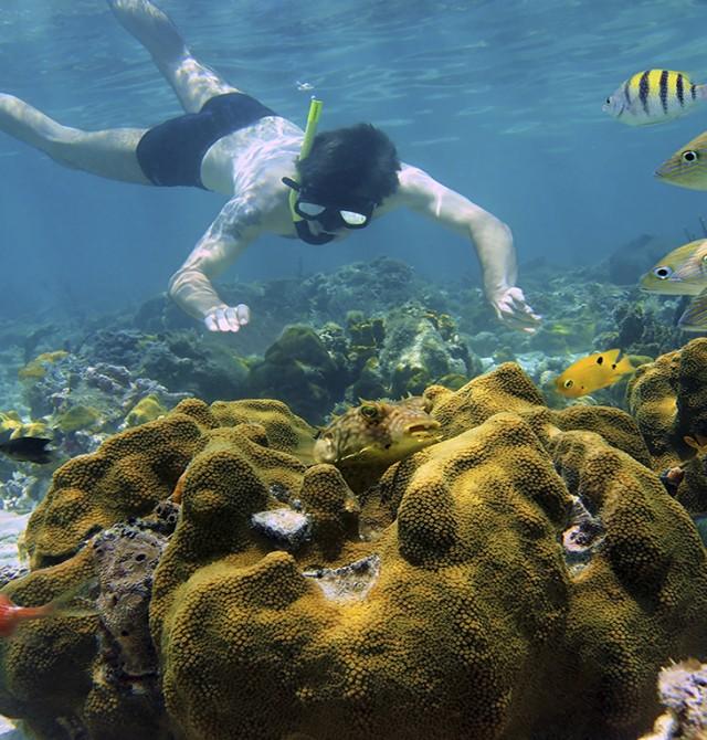 Snorkel en aguas cristalinas