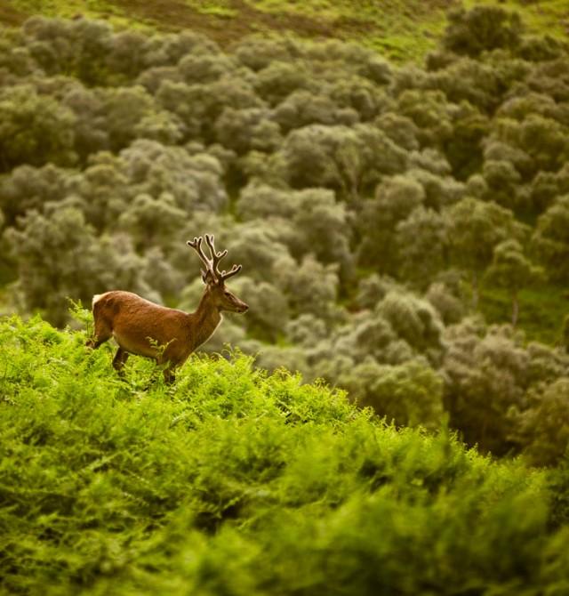 Un safari atípico