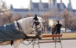 Carruaje de caballos en Austria