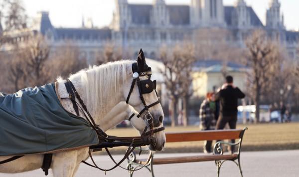 Carruaje de caballos. Viaje a Austria con PANGEA The Travel Store