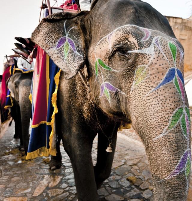 Al fuerte de Amber en elefante