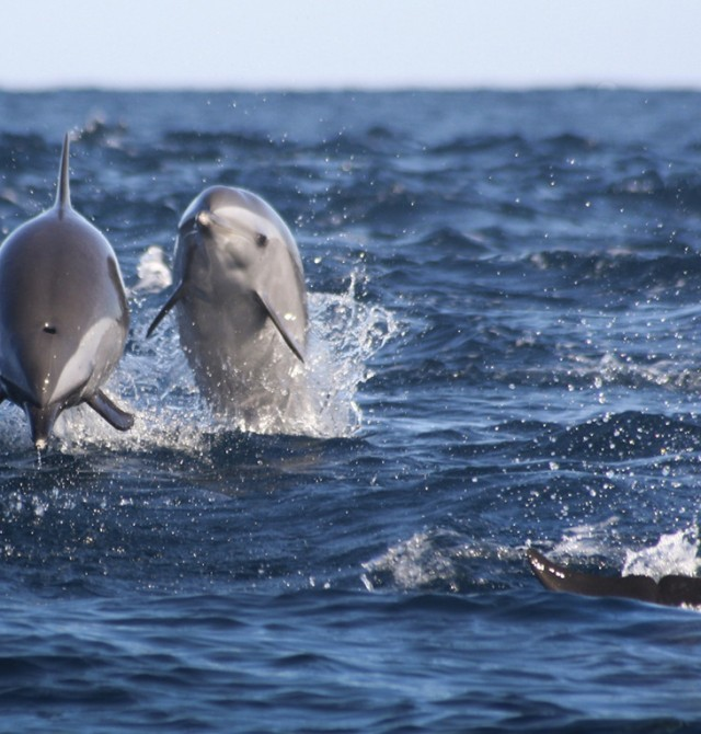 Delfines en el Cabo