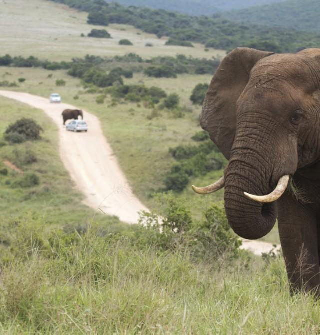 Territorio de elefantes