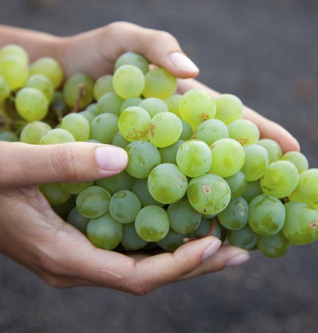 La uva canaria