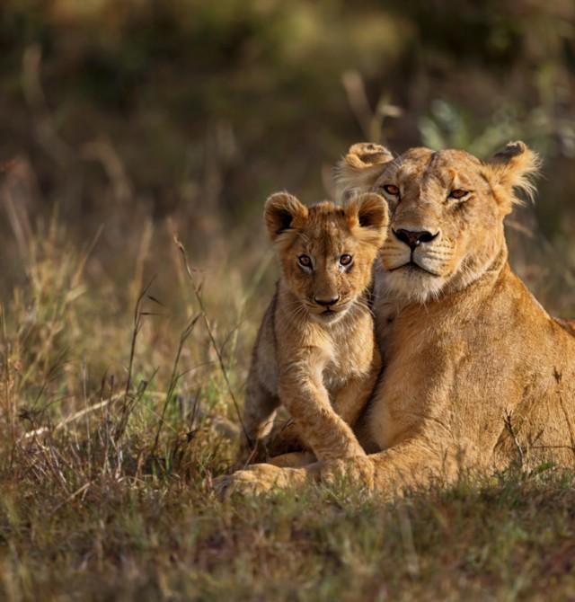 Masai Mara en Kenia