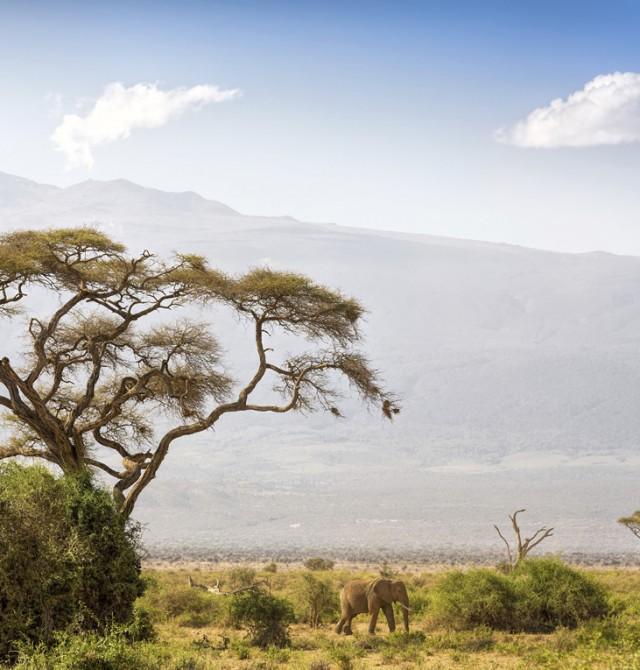 Elefante con el Kilimanjaro al fondo en Kenia