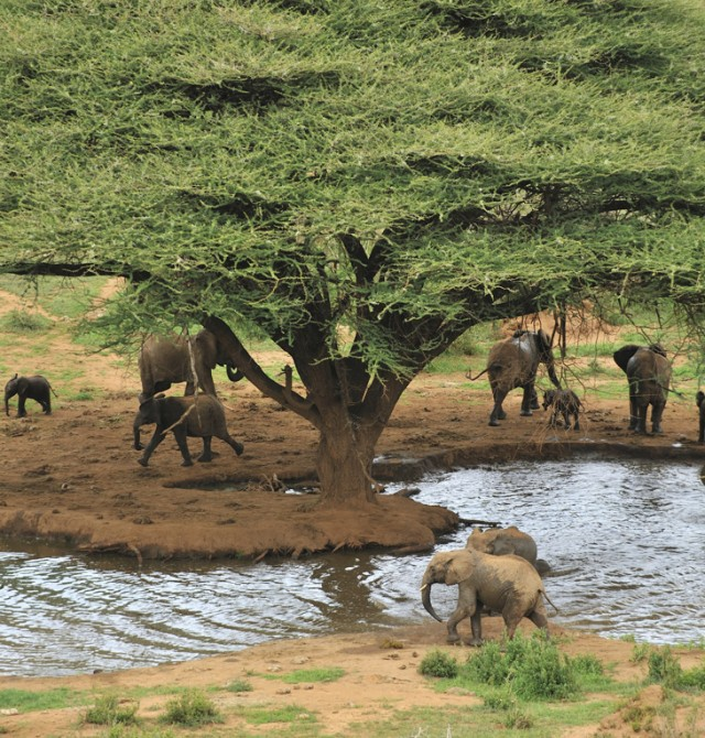 Aquí vivían los ancestros en Kenia