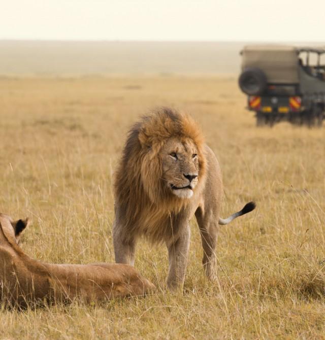 Entre aves y leones en Kenia