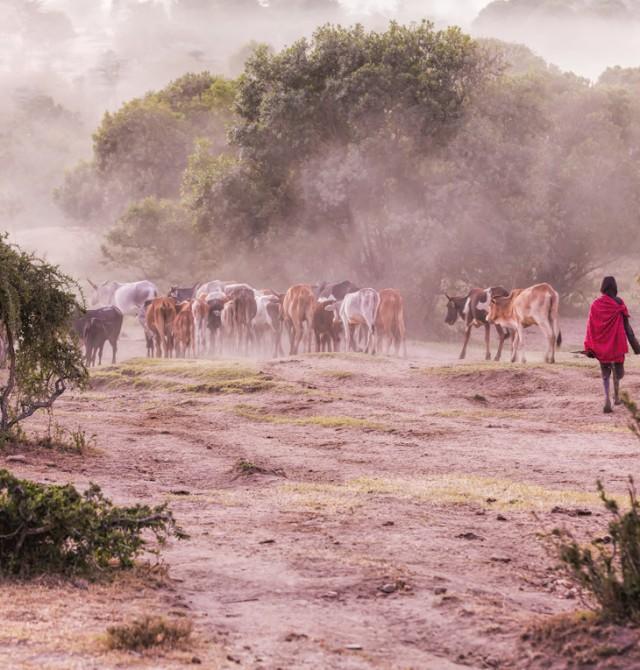 Mágicos alrededores del Kilimajaro