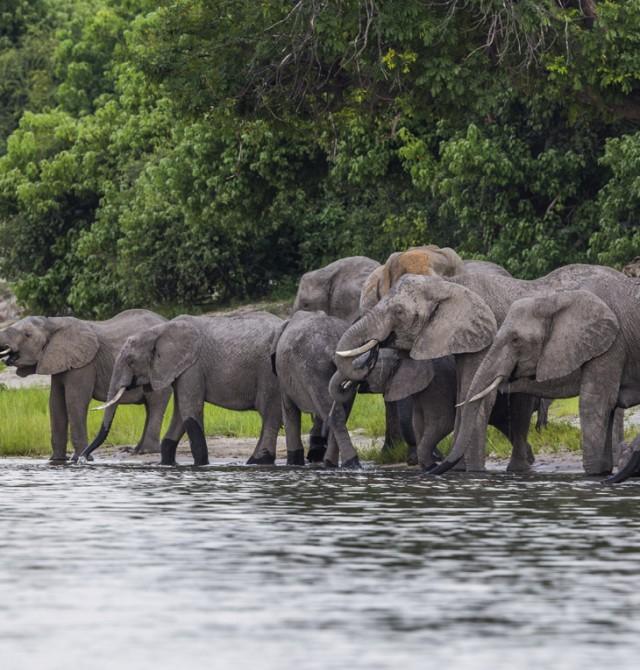 Si aprieta la sed... hay que beber en Kenia