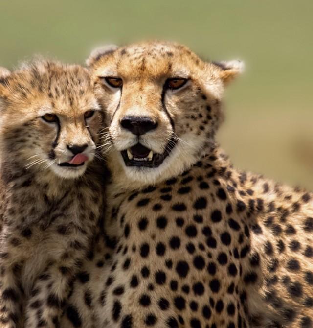 Parque Nacional de Aberdare en Kenia