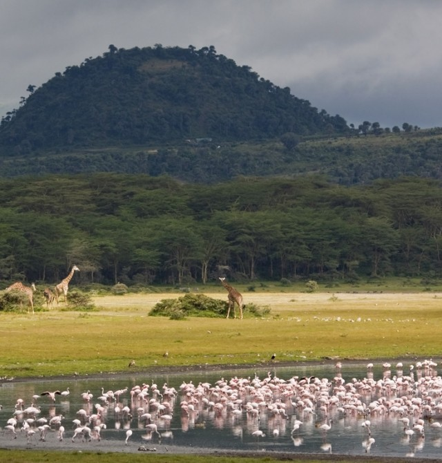 Masái Mara en Kenia