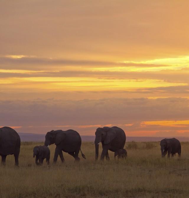 Masai Mara – Nairobi - Ciudad de origen en Kenia