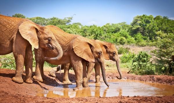 Elefantes apurando el agua. Viaje a Kenia con PANGEA The Travel Store