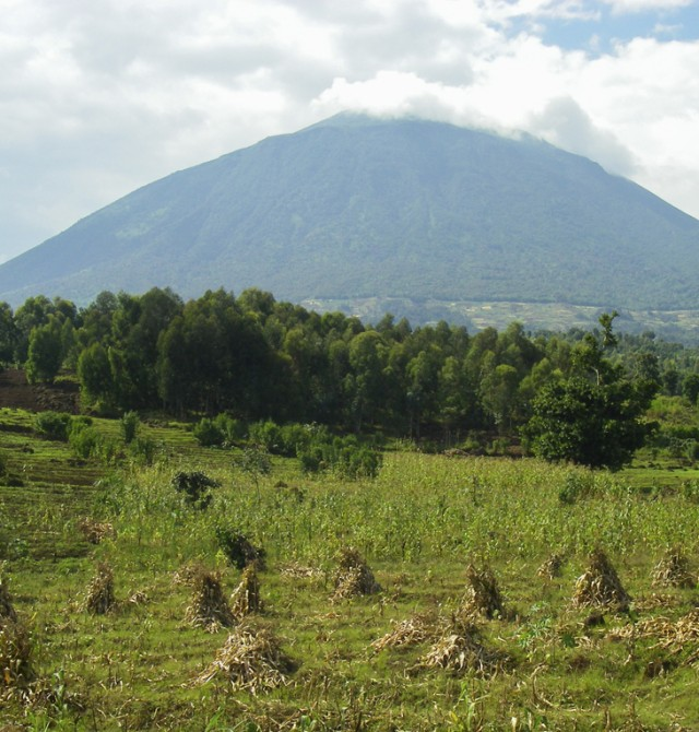Bosque impenetrable de Bwindi - Entebbe en Uganda