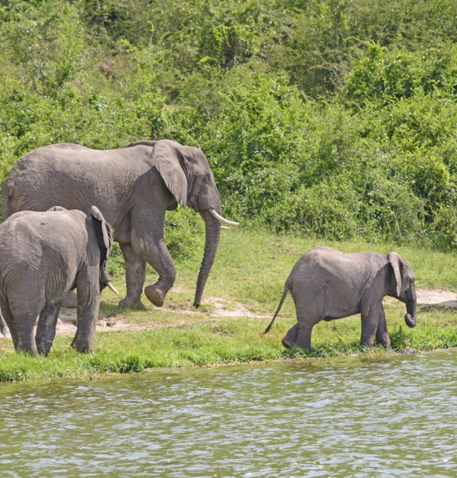 Entebbe - Parque Nacional Kibale en Uganda