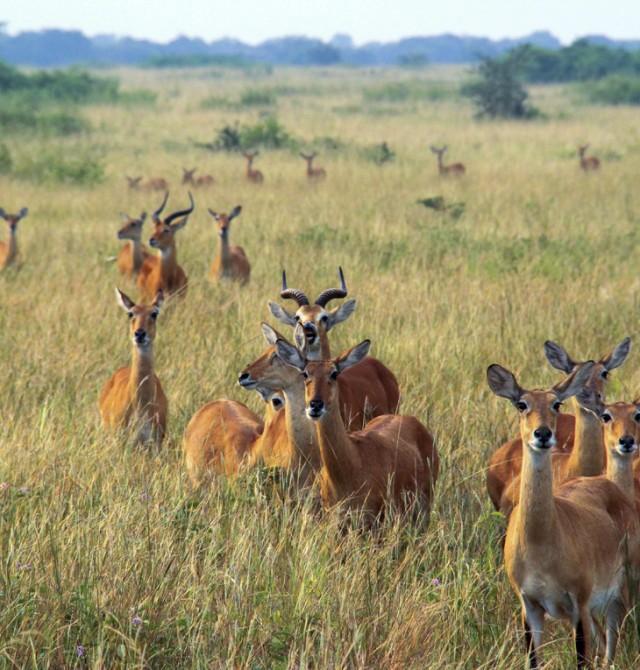 Parque Nacional Kibale - Parque Nacional Queen Elizabeth en Uganda