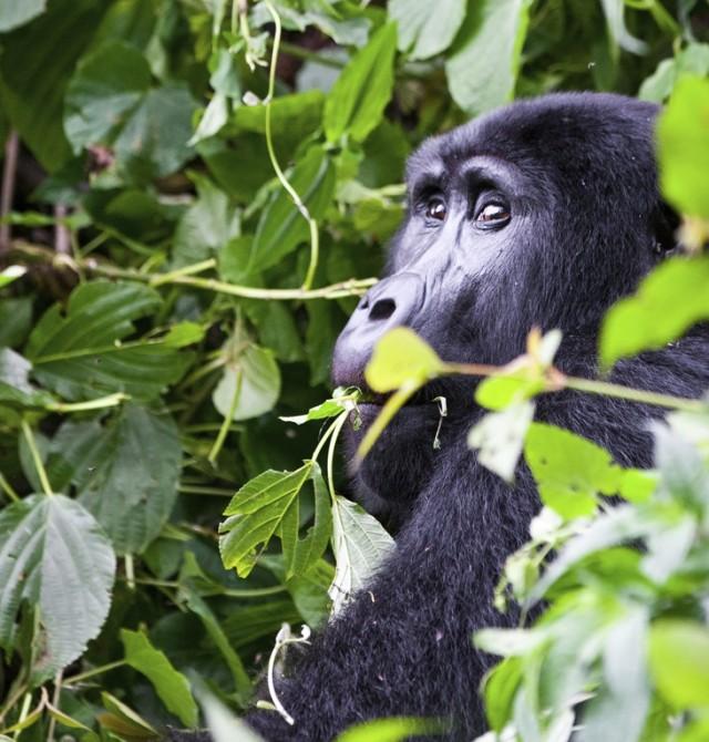 Parque Nacional Queen Elizabeth - Bosque impenetrable de Bwindi en Uganda