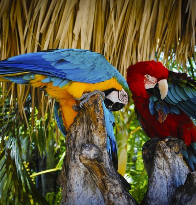 parrot en Puerto Rico