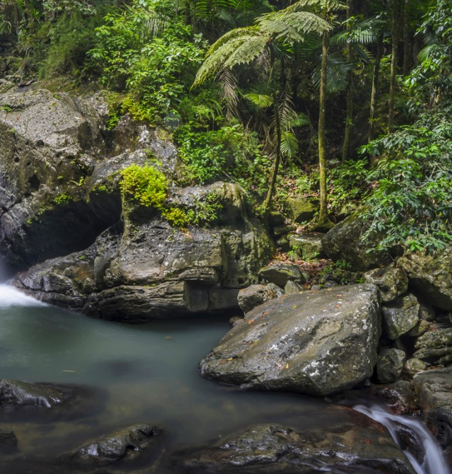Bosque nacional de El Yunque en Puerto Rico