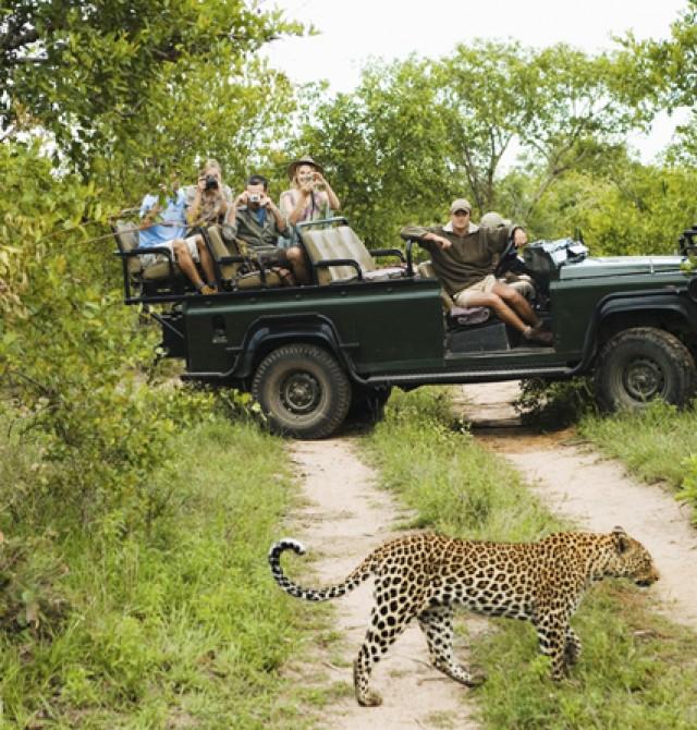 Un maravilloso safari fotográfico