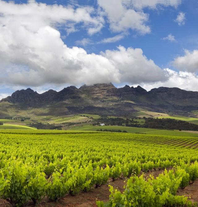Horizonte de viñedos