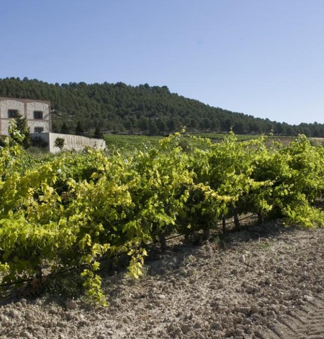 Viaje a los tesoros vinícolas en Valladolid, Ribera de Duero, San Bernardo