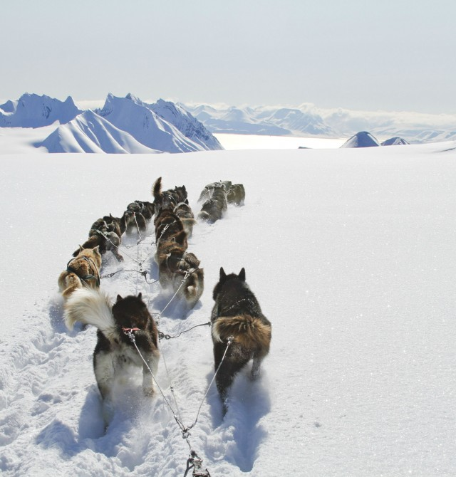 Los maravillosos huskies