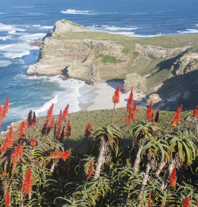 Vida entre las flores en Sudáfrica