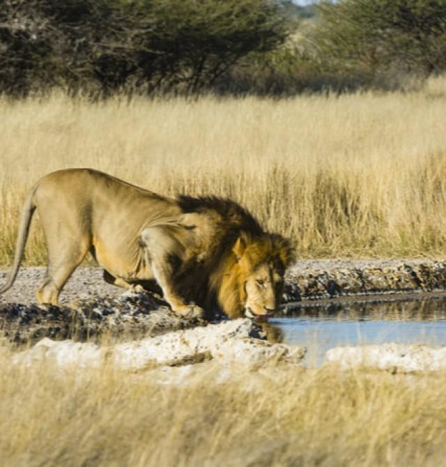 Las llanuras de Kalahari