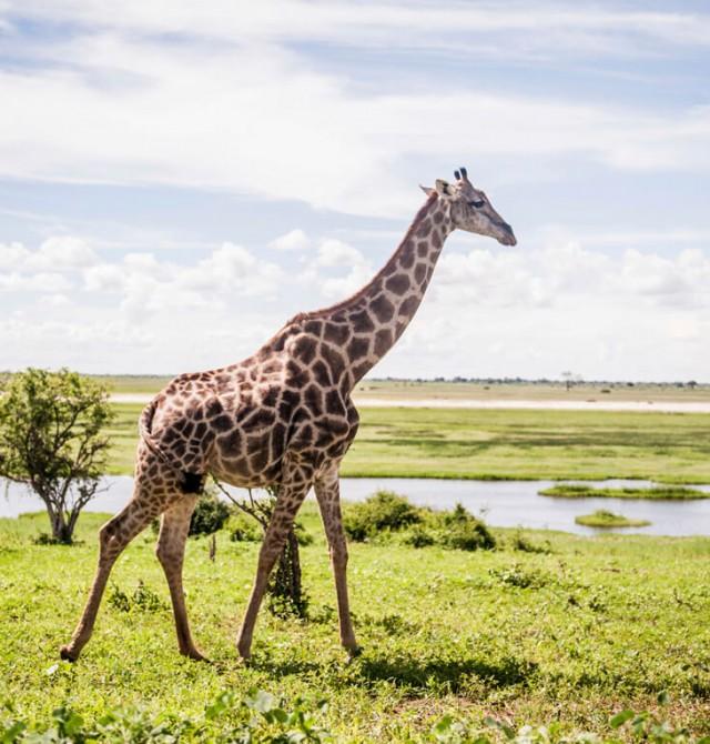 En las entrañas del Okavango
