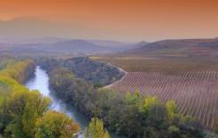 Viñedos riojanos en La Rioja, Logroño