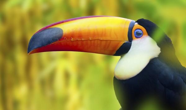 . Viaje a Nicaragua con PANGEA The Travel Store