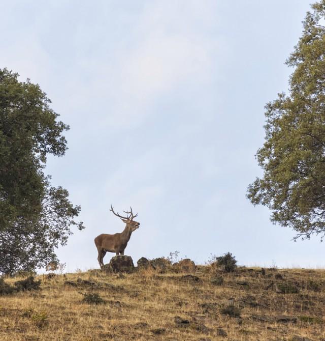 Conecta con la naturaleza en Cáceres, Parque Nacional de Monfragüe