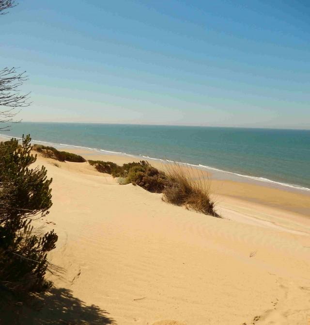 Playa de Doñana en Huelva, Parque Nacional de Doñana
