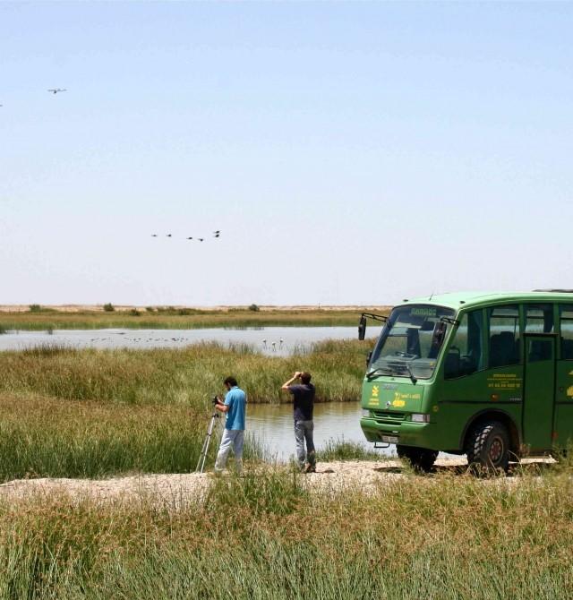 Visita 4x4  en Huelva, Parque Nacional de Doñana