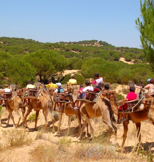 En dromedario por el paraíso en Huelva, Parque Nacional de Doñana