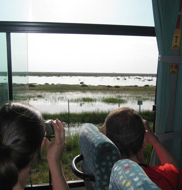 Avistamiento de aves en Huelva, Parque Nacional de Doñana