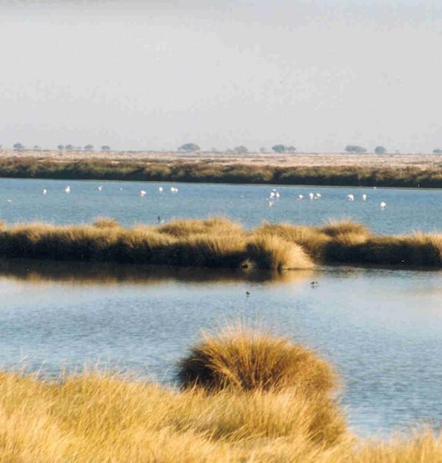 Humedales de Doñana en Huelva, Parque Nacional de Doñana