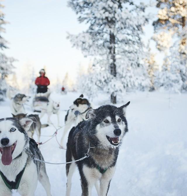 Posibilidad de realizar una excursión en trineo de perros, con los niños en Baqueira Beret, Valle de Arán